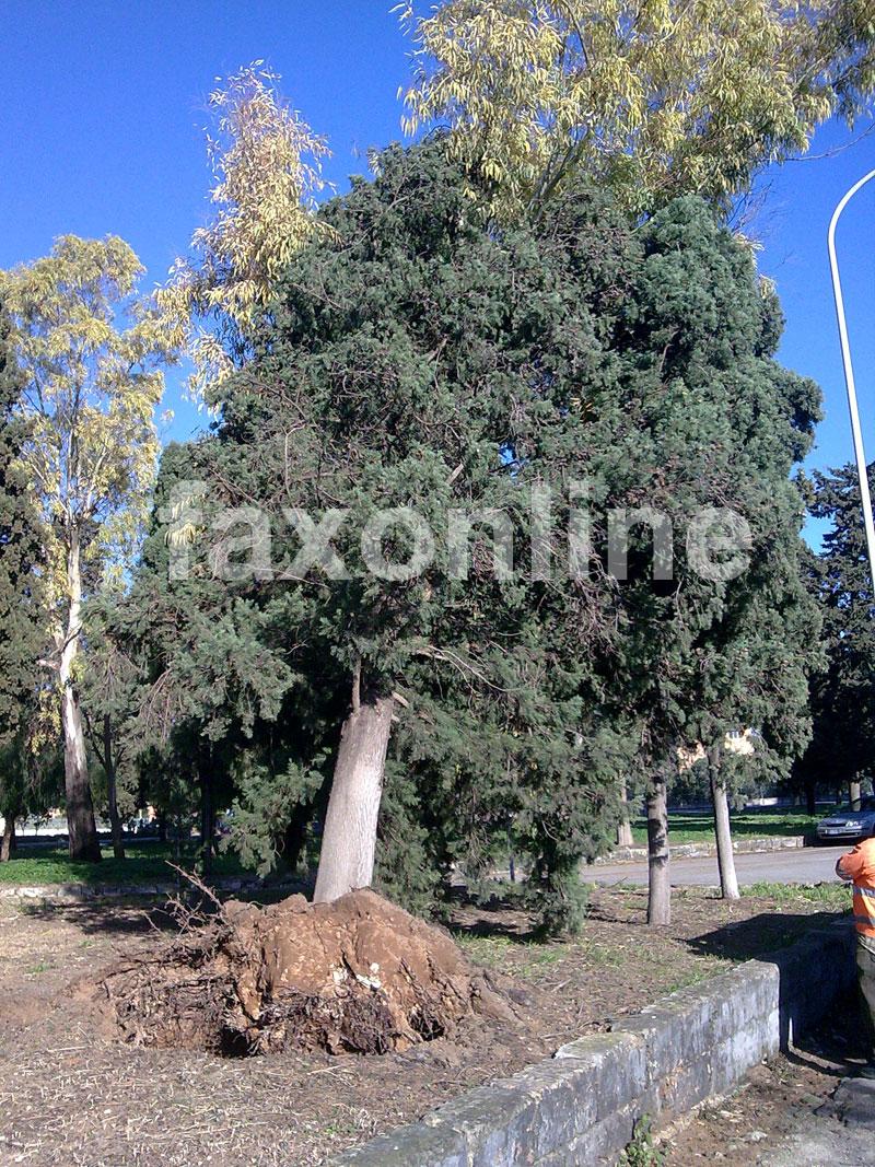 albero-cimitero