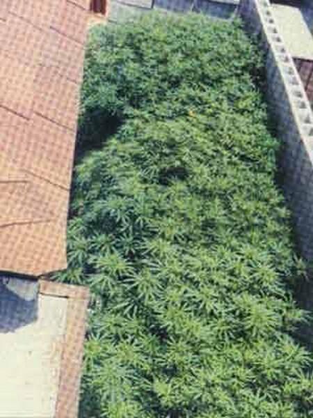 cannabis_terrazzo