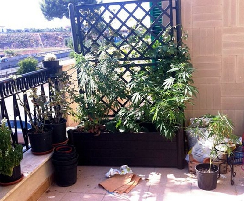 coltiva_marijuana_in_terrazzo