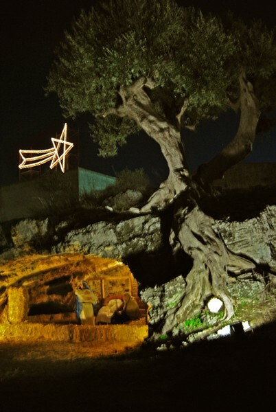 Nativit_Grotta_Albero_-_Foto_Domenico_Torres