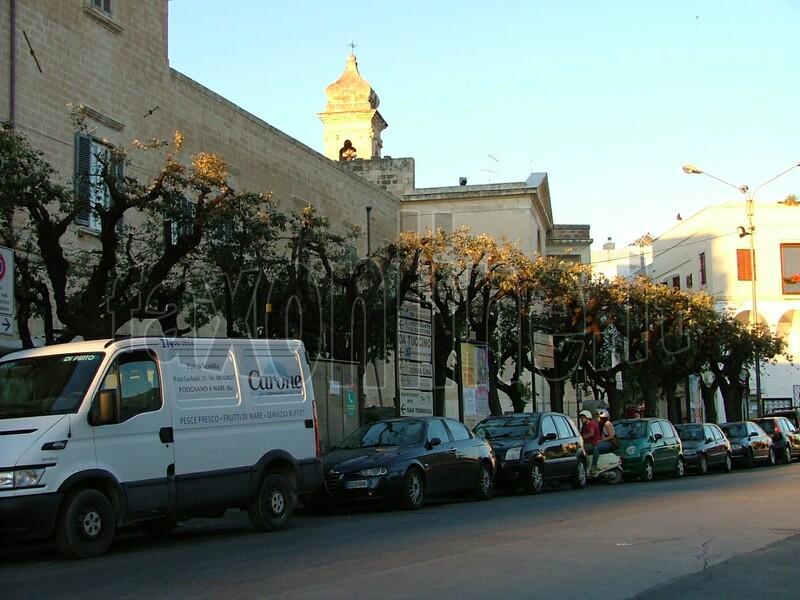 alberi_capitozzati_in_piazza_2012