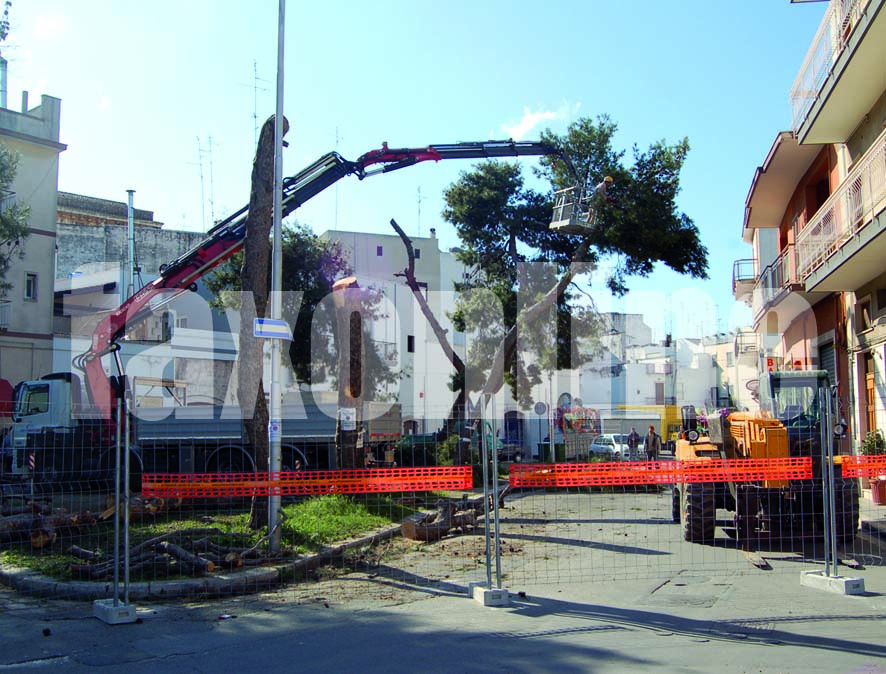 alberi_piazza_caduti