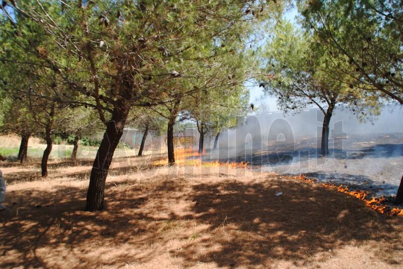 incendiopinetamonopoli (10)