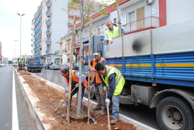 nuovi_alberi_viale_delle_rimembranze_1