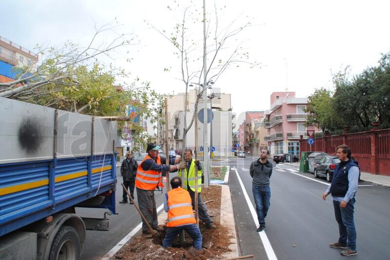 nuovi_alberi_viale_delle_rimembranze_2