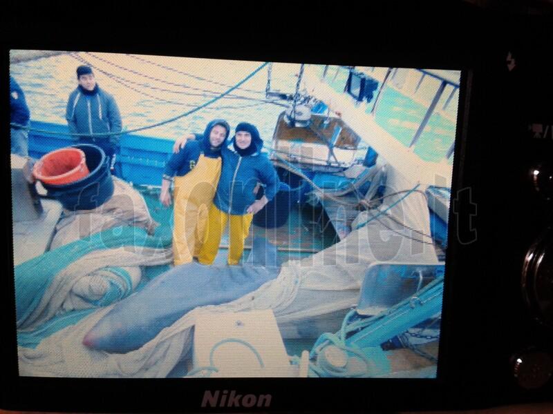 Squalo pescato a Mola