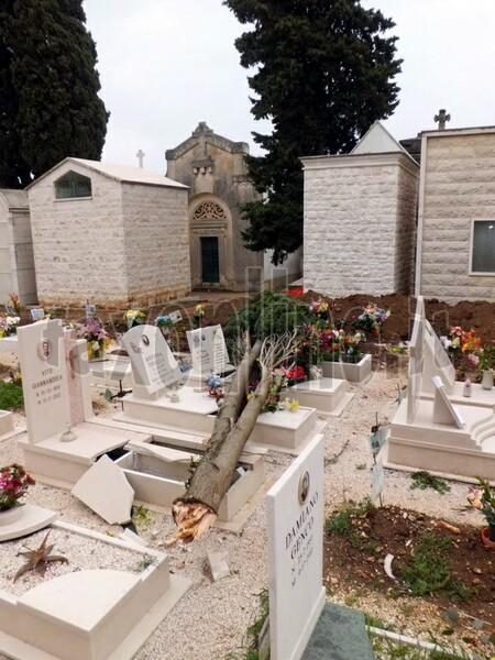 Albero_sulle_tombe_al_Cimiterob
