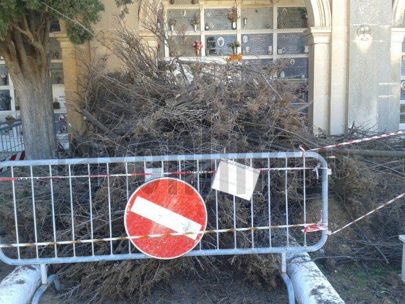 albero_rimosso_al_cimitero