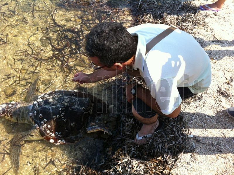 Tartaruga spiaggiata Mola