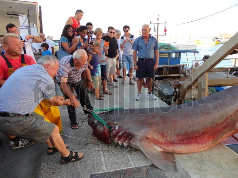 squalo catturato