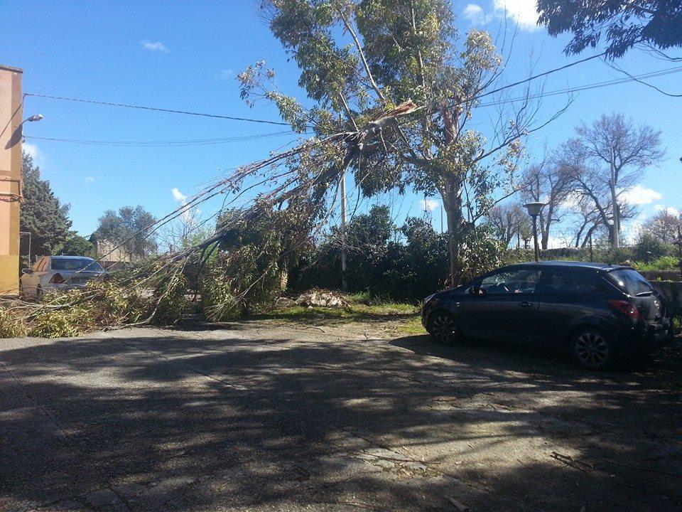 caduta albero