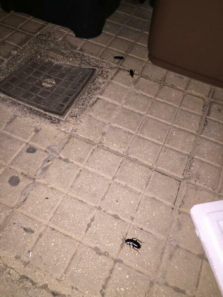 scarafaggi 2