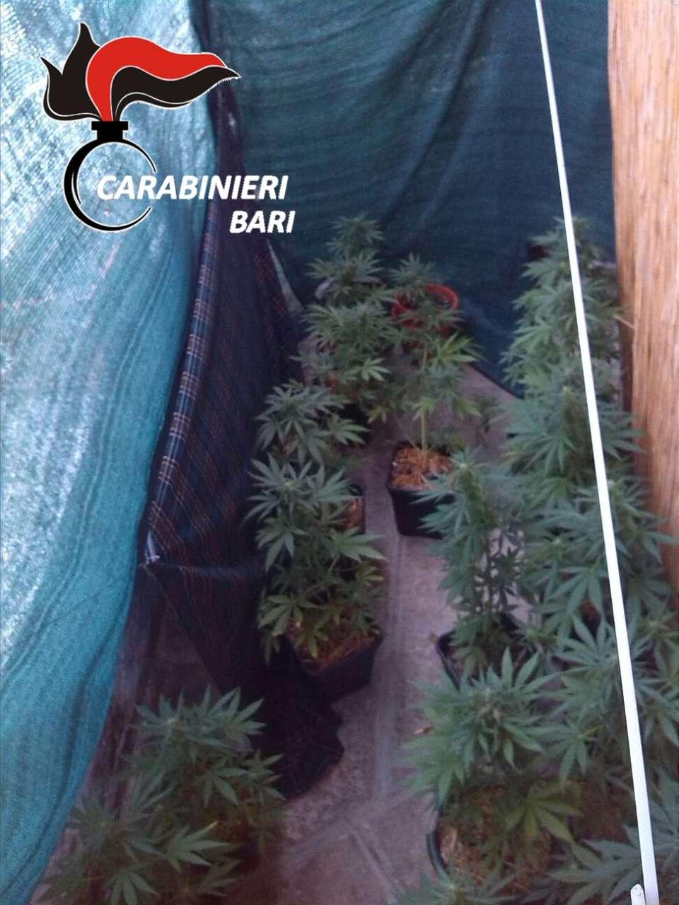 casa affitto marijuana