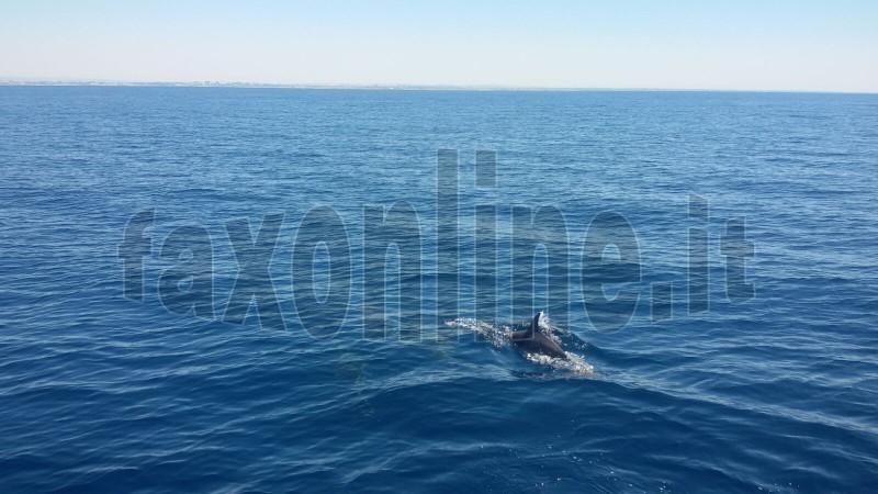 delfino polignano