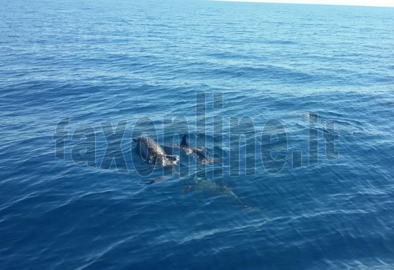 delfino polignano2