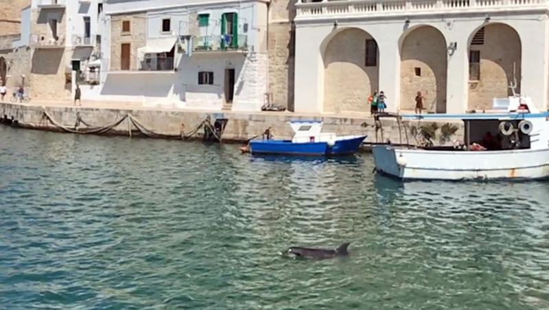 delfino porto
